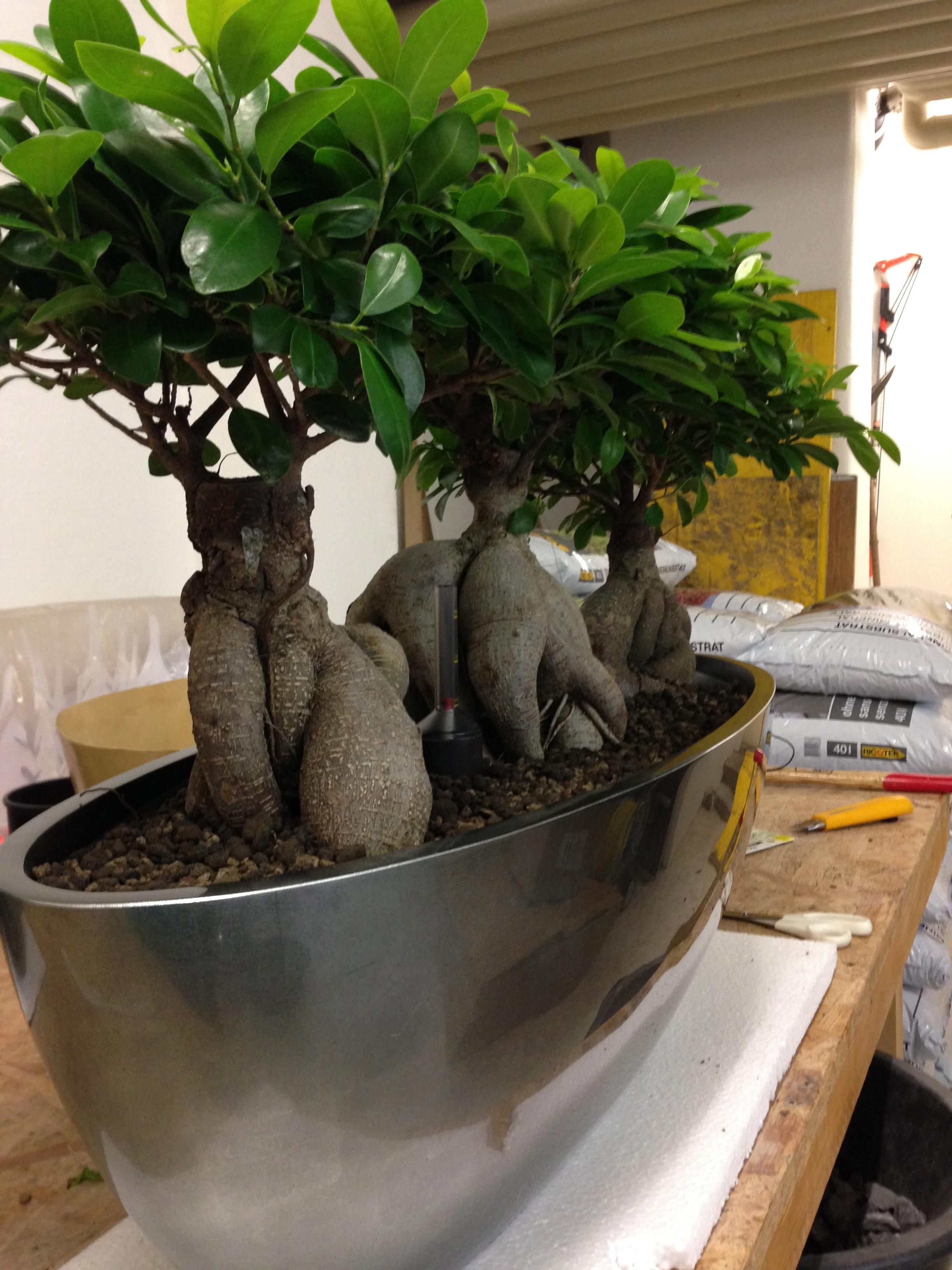 Pflanze + Topf + Zubehör + Kreativität = persönliches Grünes Möbel