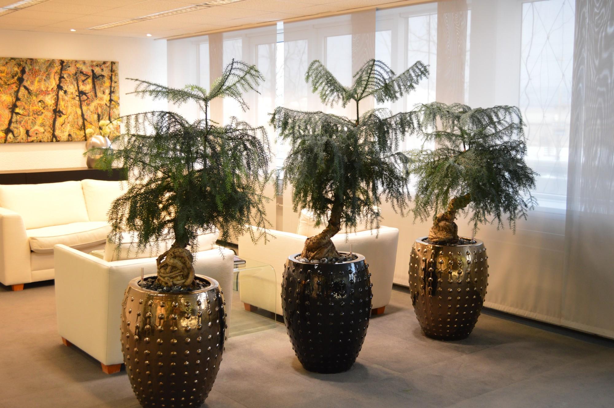 VORHER / NACHHER – Die ansprechende und einladende Begrünung des Kundenbereichs einer Firma